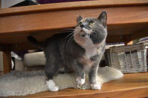En presentation av min före detta katthemskatt
